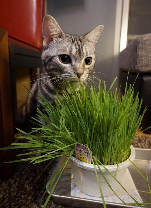 ふうちゃんと猫草