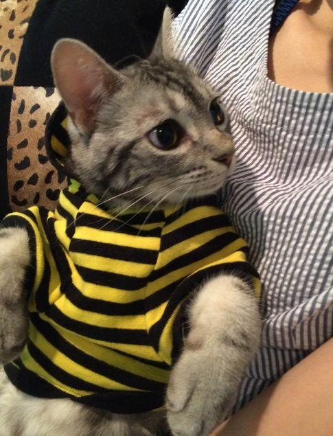 ふうちゃん蜂だっこ