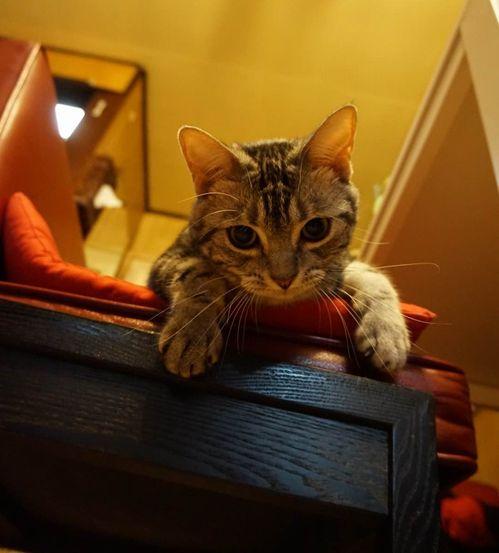 椅子の上のふうちゃん
