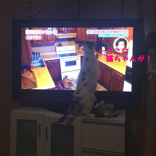 めい2テレビ