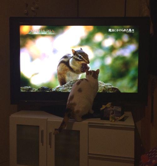 めい3テレビ
