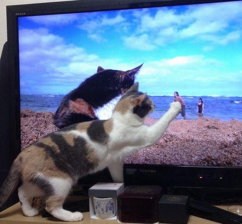 てまりテレビ