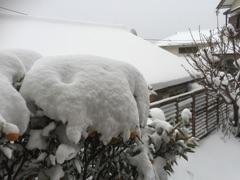 1061番小野田照子雪景色