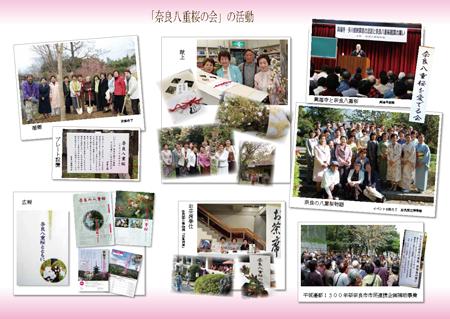 奈良八重桜の会リーフレットweb_ページ_2
