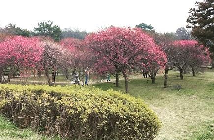 越谷梅林公園3