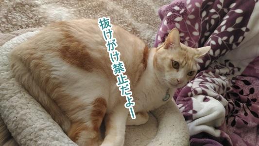 P_20160201_100738.jpg
