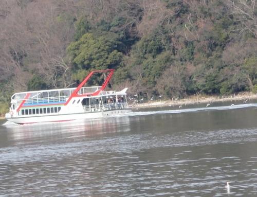 浜名湖 遊覧船とカモメ