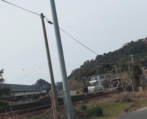 佐久米駅 ユリカモメ
