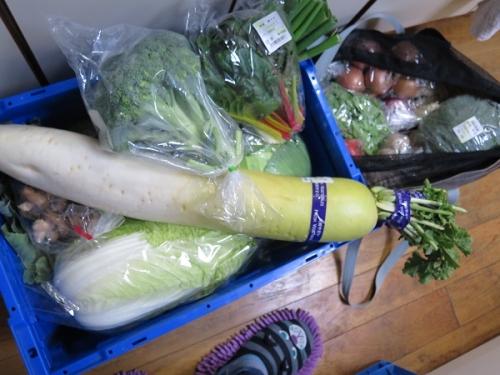 買った野菜