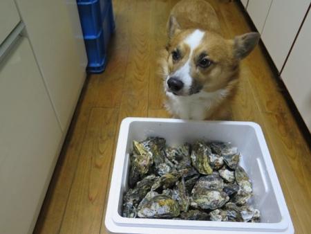まにぽちさんから牡蠣♪