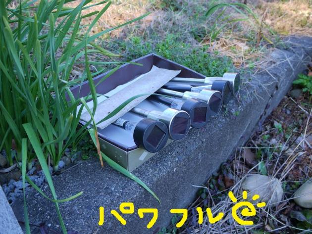 P1850177.jpg