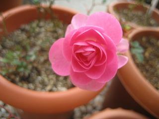 s-IMG_9444.jpg
