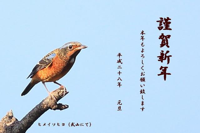 ヒメイソヒヨ (年賀)