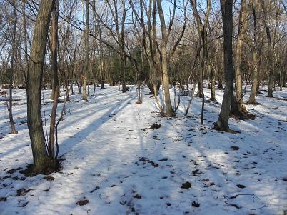 1水野の森雪風景