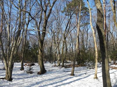 水野の森雪景色