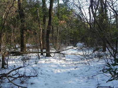 水野の森雪景色2