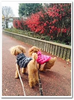 いつもの公園で散歩