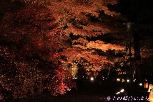 IMG_0536紅葉見ナイト8