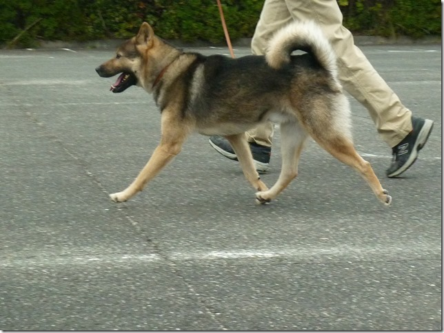 201512トレーニングとお散歩-07
