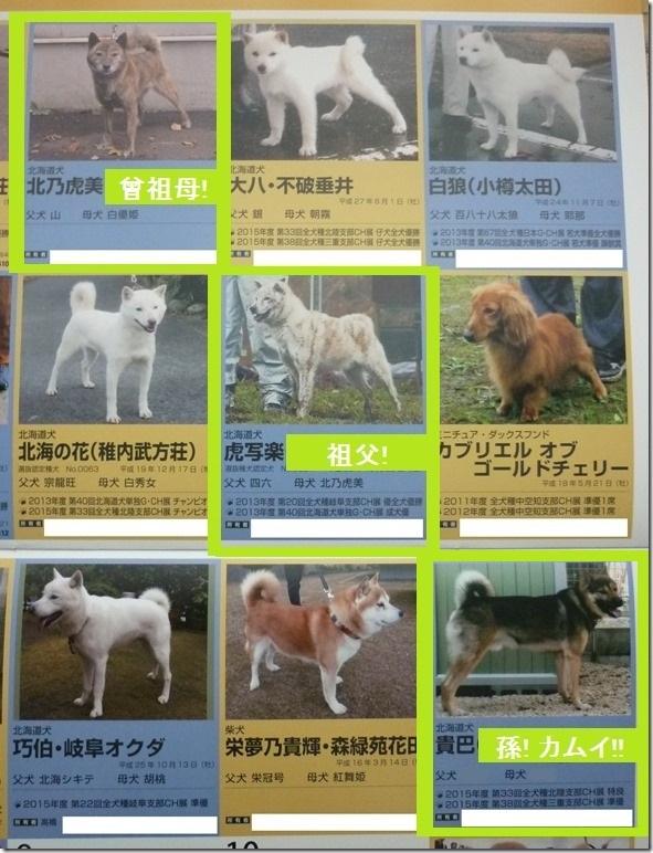 201512NKC日本ケネルクラブカレンダー03