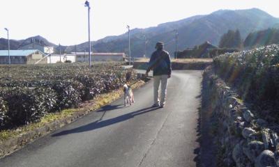 201601伊勢茶の田舎道-01