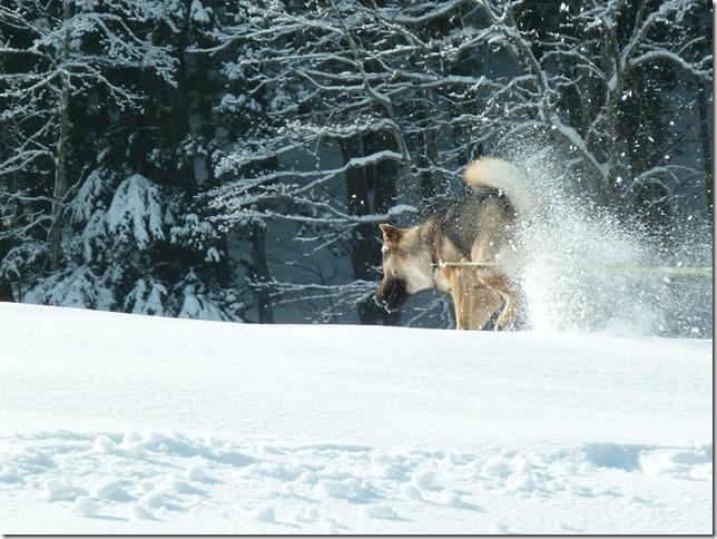 201601信州雪遊び旅11-17