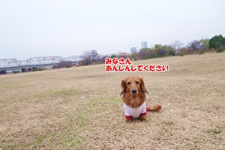 DSC07398.jpg