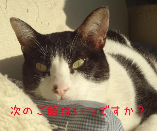 DSC06927_201602192229507d7.jpg