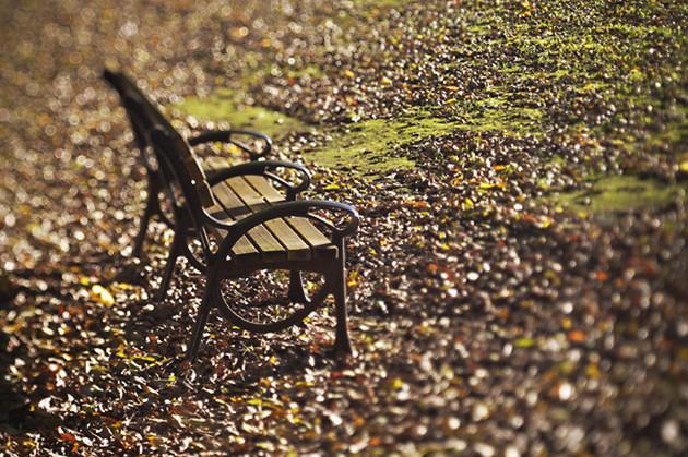 陽だまりの中のベンチ、お気に入りです。