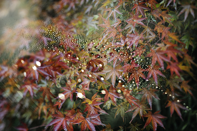 紅葉に水滴、画像合成