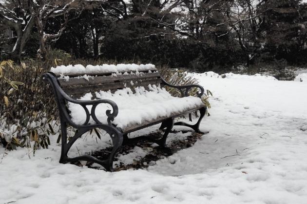 ベンチも雪に包まれてます