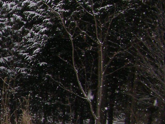 雪0116