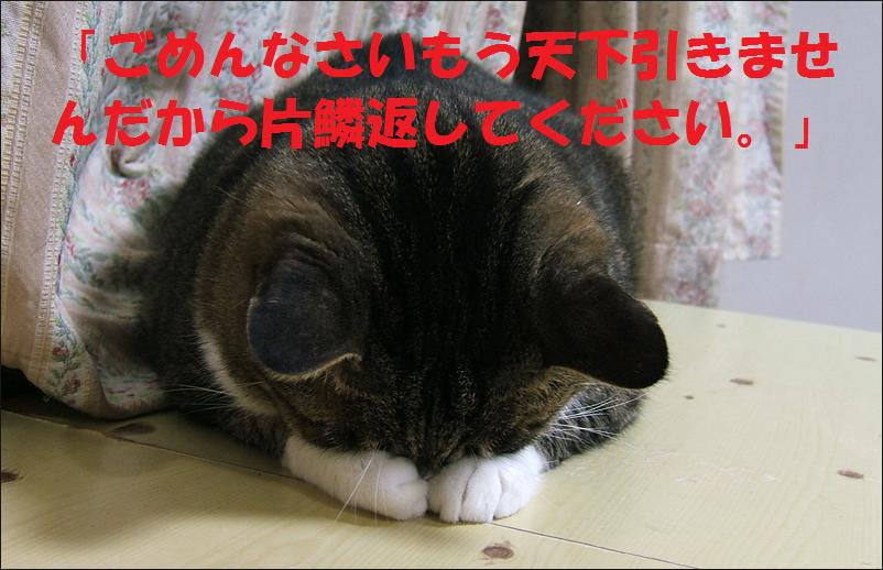 猫 ごめんなさい