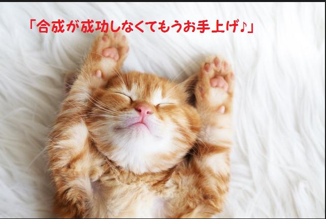 猫 お手上げ