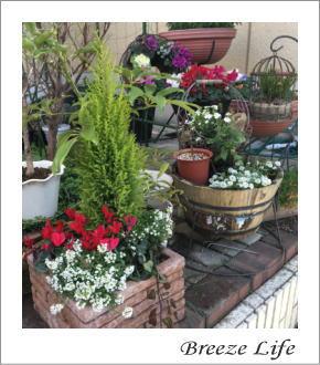 garden16122.jpg