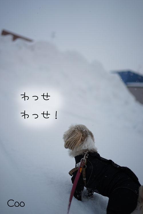 01-17_6360.jpg
