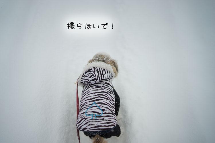 01-22_6415.jpg