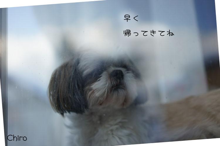 01-30_6605.jpg