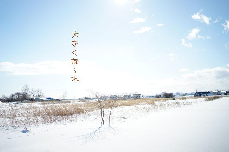 01-31_6652.jpg