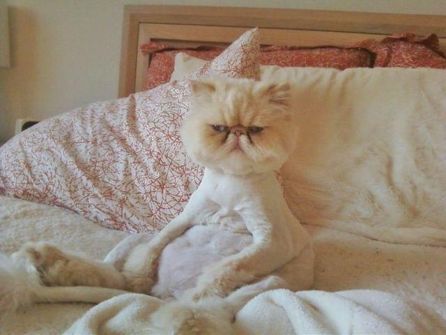 cat-bed-grumpy.jpg