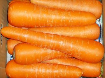 carrot2l.jpg