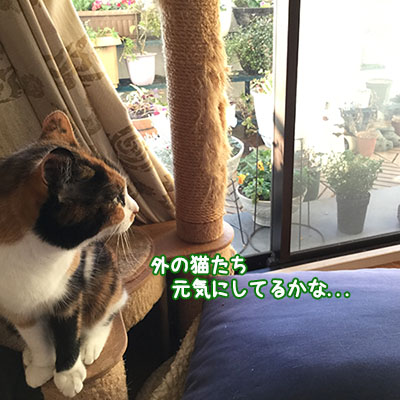 160113_viv_sikaku.jpg