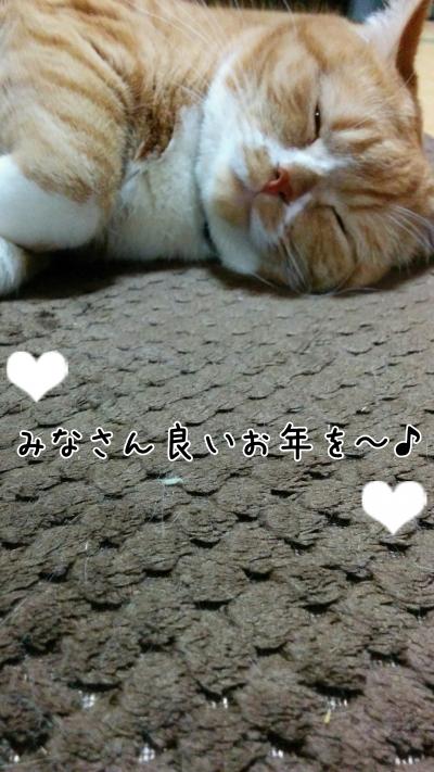IMG_20150719_003834-02.jpg