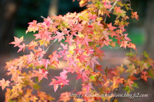 151226 Kyoto gosho 2