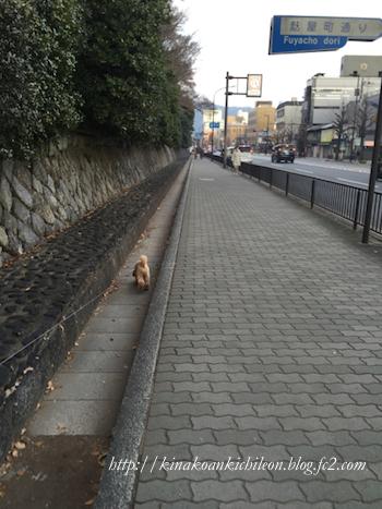 151226 Kyoto gosho 9