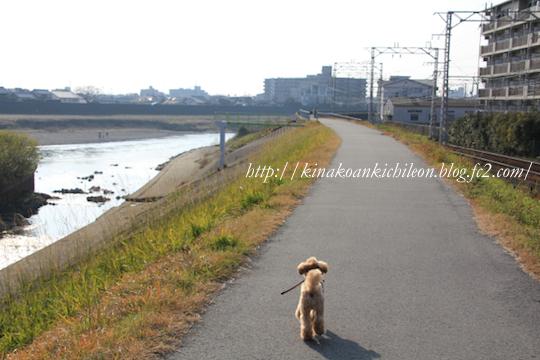 160102 Uji river 3