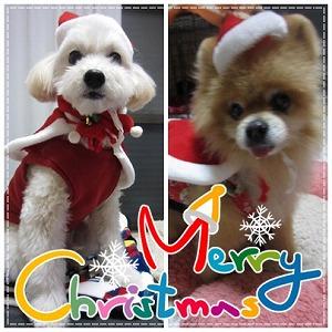 2015年クリスマス1