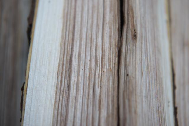 サワグルミの木目