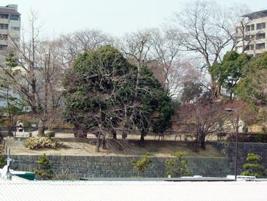 城跡公園遠望