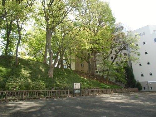 歌懸稲荷神社裏の三の丸土塁西面(2015年4月)